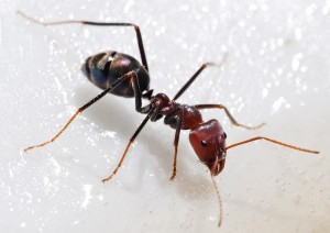 north highlands ant removal
